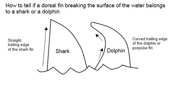 sharkordolphintxt1